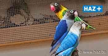 Tierheim Hannover in Langenhagen vermittelt Papageien - Hannoversche Allgemeine