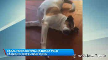 Casal de BH pede ajuda para encontrar cão desaparecido - HORA 7