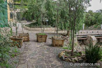 Con reforestación sanean arroyo cachinches, en San Miguel de Allende - Zona Franca