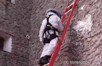 Los bomberos intervienen para retirar un nido de avispas en Salinas de Medinaceli - Soria Noticias
