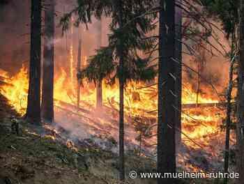 Weiterhin hohe Waldbrandgefahr
