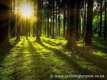 East Riding of Yorkshire Community Tree Fund grants available - application open now and until August 30 - Pocklington Post
