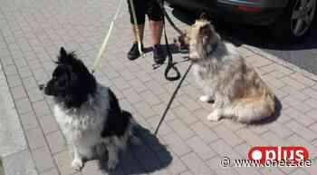 Hunde bei Hitze im Wohnmobil: Zögert Polizei Neustadt mit Rettung? - Onetz.de