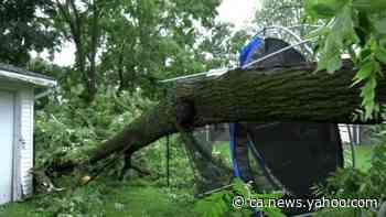 Severe thunderstorms snap large trees in Palmerston, Ontario - Yahoo News Canada