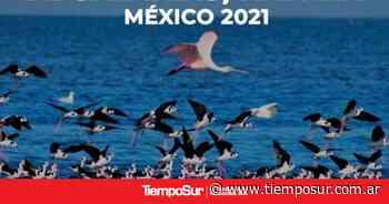 Rio Gallegos será parte del Festival Internacional de Aves Playeras Migratorias - TiempoSur Diario Digital