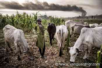 Natives, Fulani herders clash in Southern Kaduna - Vanguard