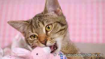 Medien ohne Sommerloch - Einfach mal Katzenvideos schauen - Deutschlandfunk