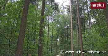 So soll in Laichingen der Wald genutzt werden - Schwäbische