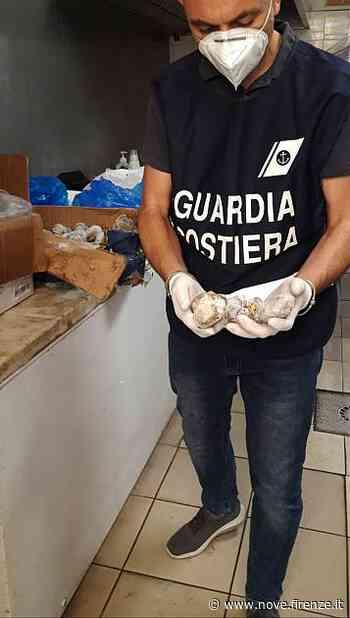 Prato, chiusa pescheria cinese - Nove da Firenze