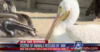 The Amos Rehabilitation Keep rescues more than 80 animals after Hurricane Hanna - KRIS Corpus Christi News