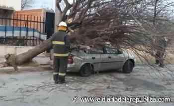 Un árbol cayó sobre un auto en la ciudad de San Luis - El Diario de la República