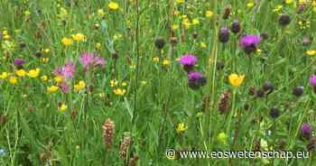 Een boeketje wildgroei van eigen veld - Eos Wetenschap