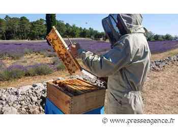 LORGUES : De l'abeille au miel en pot et du pot de miel à l'abeille, le parcours du Miel Martine - La lettre économique et politique de PACA - Presse Agence