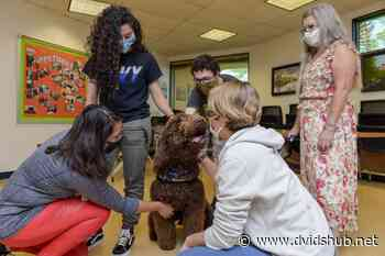 Amos the Therapy Dog: Corry Station's Stress Management Alternative - DVIDS