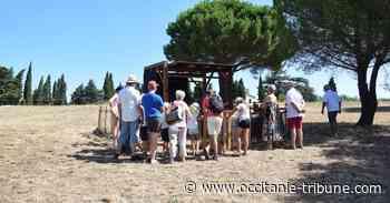 Perpignan - Deux week-end pour faire une pause archéo à Ruscino ! - OCCITANIE tribune
