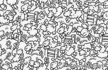 Desafío visual: encontrá al pollo camuflado entre las ovejas (pocos lo adivinan) - La 100