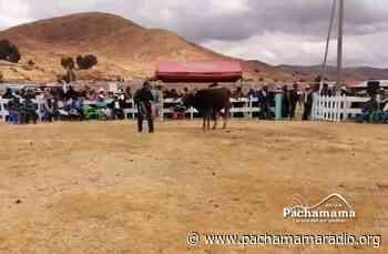 Puno: organizan feria ganadera en zona alta de Platería - Pachamama radio 850 AM