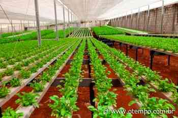 Vale cria projeto para fomentar agricultura em Brumadinho - O Tempo