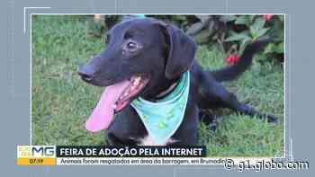 Animais resgatados após rompimento de barragem, em Brumadinho, podem ser adotados em feira virtual - G1