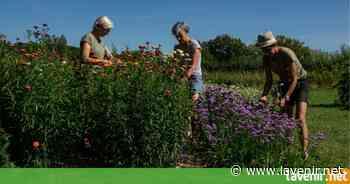 Jamioulx: des fleurs locales et de saison (Ham-sur-Heure-Nalinnes) - l'avenir.net