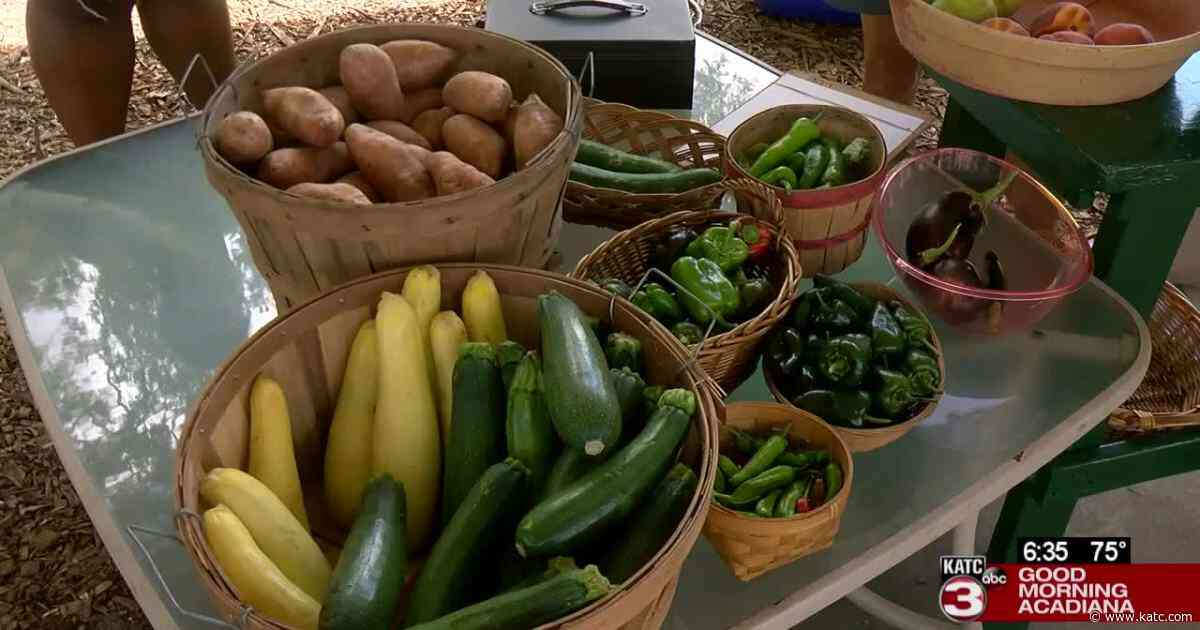 Not everyone is a great gardener, and for those without a green thumb there's a farmer's market - KATC Lafayette News