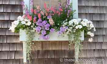 The Self-Taught Gardener: Water is not love - theberkshireedge.com