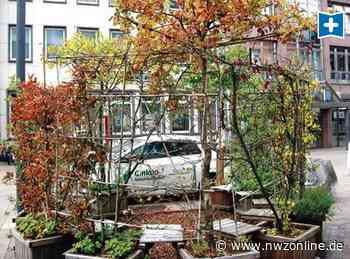 Cloppenburg Sommergärten: Vertrockneter Garten sorgt für Ärger - Nordwest-Zeitung