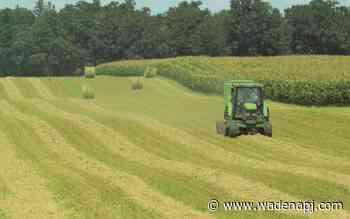 Warm weather spurs crops on toward early harvest - Wadena Pioneer Journal