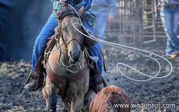 Saddle up for Wadena's rodeo Aug. 7-8 - Wadena Pioneer Journal