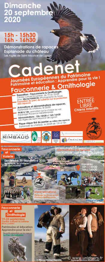 Fauconnerie et Ornithologie Centre Culturel La Laiterie samedi 19 septembre 2020 - Unidivers