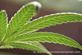 Smoker Farms bringing craft-style cannabis to Beaverdell - Cranbrook Townsman