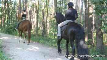 Keine Angst vor den großen Pferden - Nordbayern.de