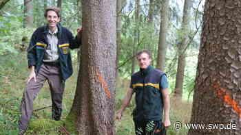 Wald Gaildorf: Borkenkäfer vernichtet Kirgelwäldle - SWP
