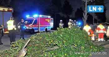 Unfall in Lübeck: Fahrerin weicht Reh aus und kollidiert mit zwei Bäumen