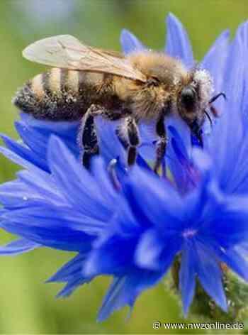 Natur: Insektenparadies am Kreishaus - Nordwest-Zeitung