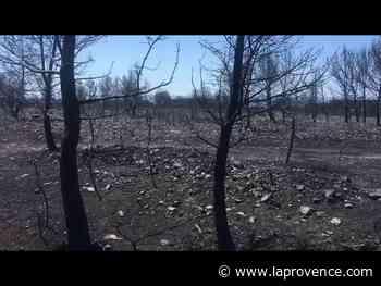 Feu de Martigues : paysage de désolation à Sausset - La Provence