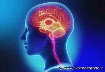 Spermidina, la molecola in grado di correggere i difetti della memoria - Il Valore Italiano
