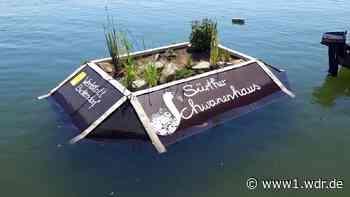 Schwimmendes Insel-Paradies für Wasservögel in Köln