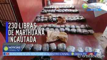 Incautan 230 libras de marihuana en Candelaria de la Frontera, Santa Ana - Canal de Noticias de El Salvador - Orbita TV