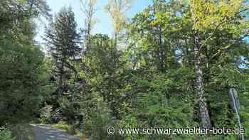 Straubenhardt: Der trockene Boden hat kaum Reserven - Straubenhardt - Schwarzwälder Bote