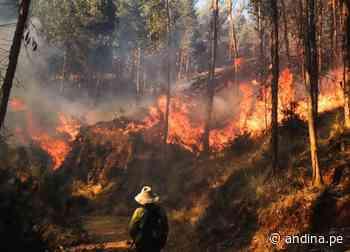 Cusco: incendio forestal en distrito de Ocongate deja más de 50 heridos - Agencia Andina