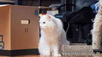 Umzug: Gerüche helfen Katzen in neuer Umgebung - Leben mit Tieren - Rhein-Zeitung