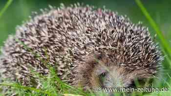 So überstehen Wildtiere heiße Tage - Leben mit Tieren - Rhein-Zeitung