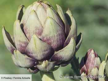 L'artichaut, l'or vert du Roussillon - Femme Actuelle