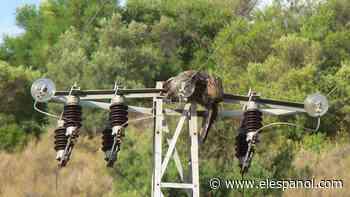 Los puntos negros de la masacre de aves en España: aquí se chocan con el tendido eléctrico - El Español
