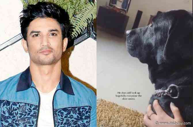 Sushant Singh Rajput's dog Fudge missing him; niece Mallika shares heartbreaking video