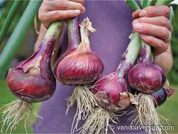 Contaminated Californian onions have made 69 British Columbians sick