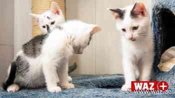 Hattingen: Wilde Katzen vermehren sich in diesem Jahr stark - Westdeutsche Allgemeine Zeitung