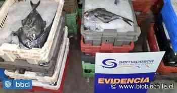 Sernapesca incauta cerca de dos mil kilos de reineta en Concepción - BioBioChile