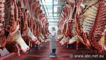 Why was there a COVID-19 outbreak in Colac's abattoir, but not one in Warrnambool? - ABC News